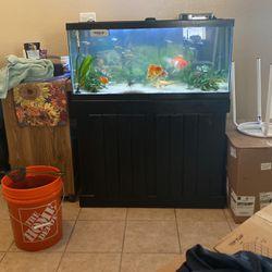40 Gallon Breeder W/ Stand for Sale in Fresno,  CA