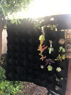 Living wall planter with succulents included for Sale in La Mirada, CA