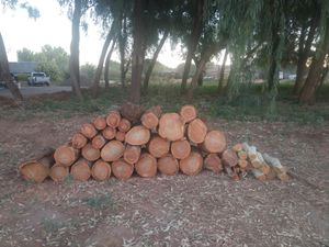 Free Eucalyptus wood just cut today. for Sale in Chandler, AZ