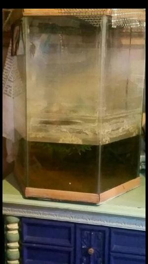 Large fish tank for Sale in Las Vegas, NV