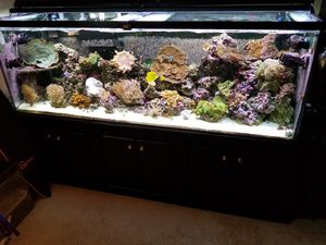 125 Gallon Reef Ready Glass Aquarium for Sale in Vacaville, CA