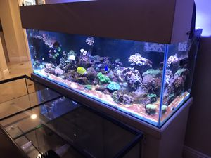 Free 180 gallon aquarium only for Sale in Dana Point, CA