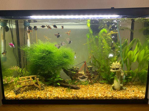Fish tank 30 gallon