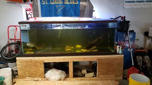 265 gallon aquarium with fx4,and fx6 canister filters for Sale in High Ridge, MO