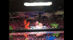 30 x 12 Aquarium Tank set with many extras for Sale in Richmond, VA