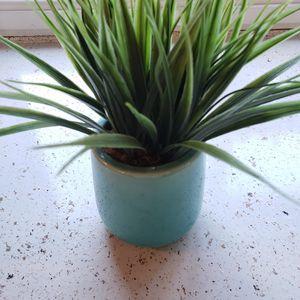 Cute plant for Sale in Bonney Lake, WA