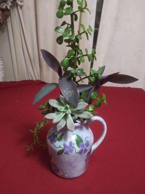 Succulents en jarroncito de cerámica pequeña for Sale in Bell, CA