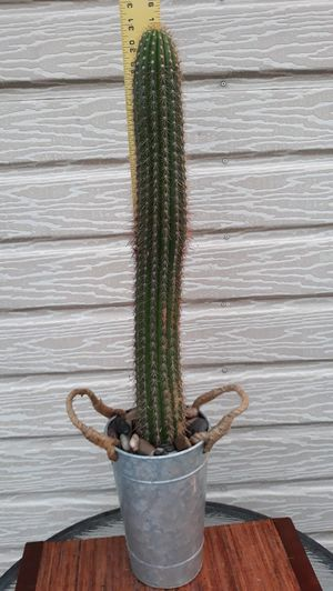 Cactus in Tin Pot w/Rope on each side (white flowers) for Sale in Long Beach, CA