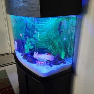 55 Gallon custom fish Tank for Sale in Torrance, CA