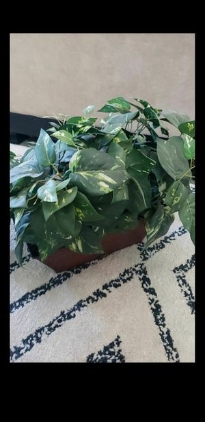 Large green plant for Sale in Fontana, CA