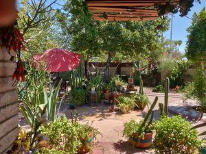 Garden,Plants , cacti, succulents for Sale in Phoenix, AZ
