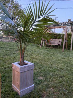 Planter and palm for Sale in Waynesboro, VA