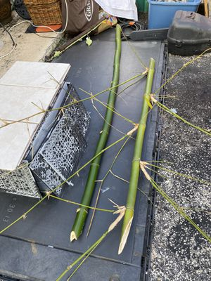 Bamboo $10 ea 3/$25 for Sale in Plantation, FL