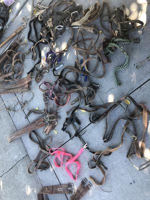 Frenos para caballos for Sale in San Jose, CA