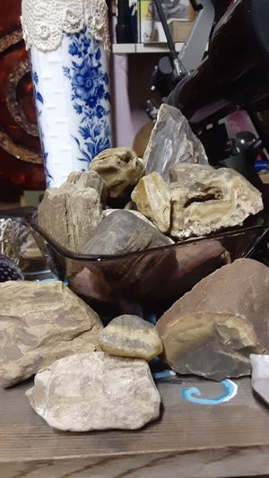 Petrified Wood for Sale in Sweet Home, OR