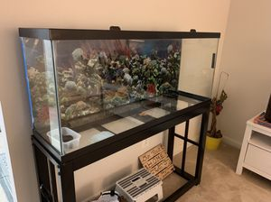 55 Gallon Fish Tank with stand, filter and everything else for Sale in Rockville, MD