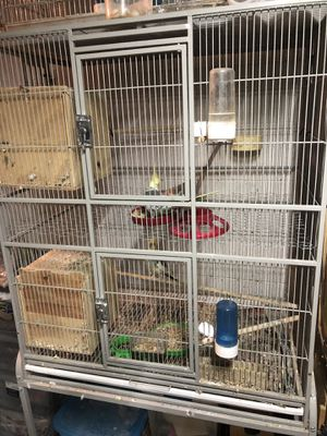 Bird cage , jaula for Sale in Plant City, FL