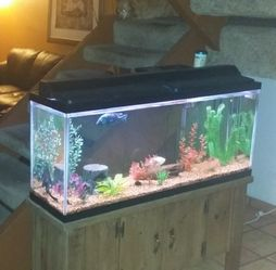 Fish Tank for Sale in Tempe,  AZ