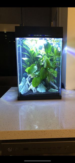 10 Gallon High Fully Scaped/Decorated Tank w/ all Materials & fancy Marble Plakat Betta Included for Sale in Los Angeles, CA