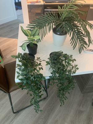Fake plants for Sale in Fort Lauderdale, FL