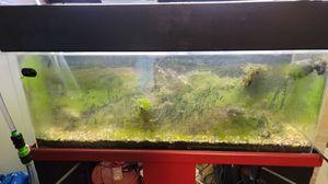 60 gallon freshwater fishtank for Sale in Boise, ID