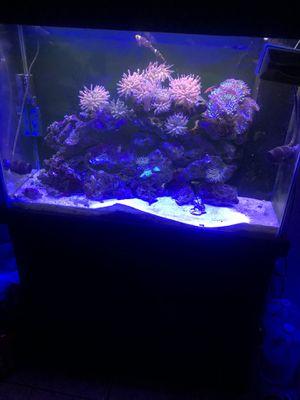 65g reef tank for Sale in Fontana, CA