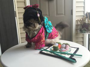 Ciao ciao Sz Small geisha cat / small dog costume for Sale in Fairfax, VA