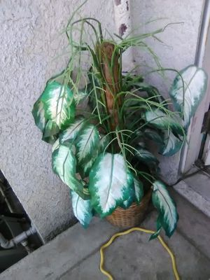 Fake plant for Sale in Fresno, CA