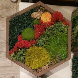 Hexagon Moss Art Custom Set Of 5 Or 6 for Sale in Hayward,  CA