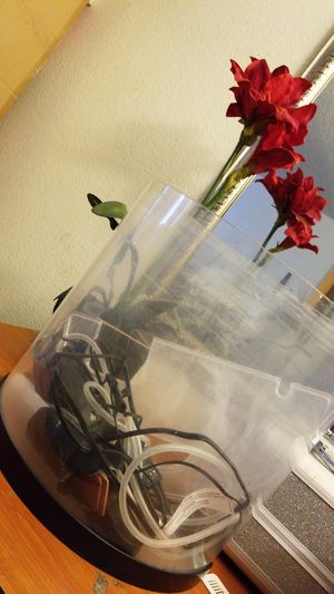 5 gallons fish tank for Sale in Las Vegas, NV