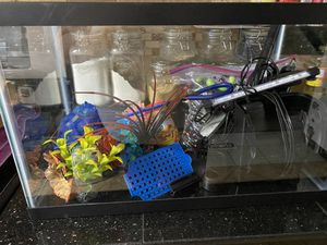 10 gallon fish tank set up for Sale in Gresham, OR