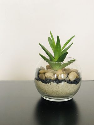 succulent plant crafted for Sale in Boston, MA