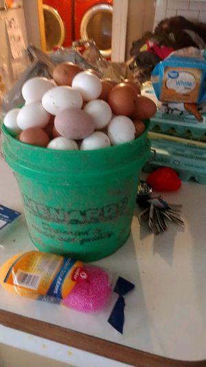 Fresh eggs for Sale in Cardington, OH