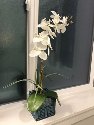 Orchid Plant for Sale in Sumner, WA