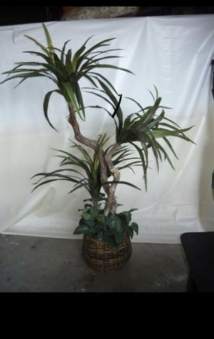 Fake plant for Sale in Irving, TX