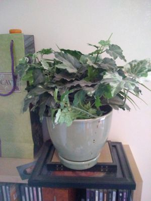 Artificial plant with pot..great for deco on Christmas for Sale in Winter Haven, FL