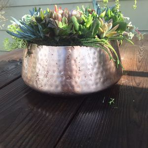 Succulents for Sale in Santa Ana, CA