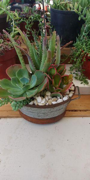 Succulent tin arrangement for Sale in San Marcos, CA