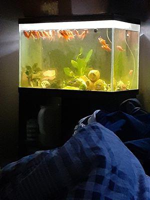 Tank!!! for Sale in Lexington, KY