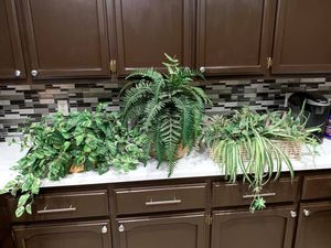 Plants for Sale in Hesperia, CA