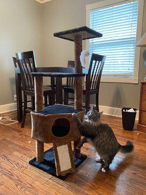 "42"" Cat Tree for Sale in Beaufort, SC"