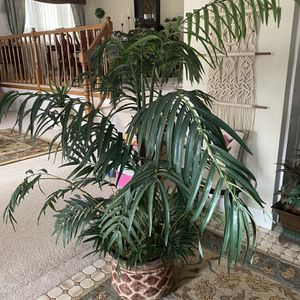 Fake Palm/ Fake Plant for Sale in Orland Park, IL