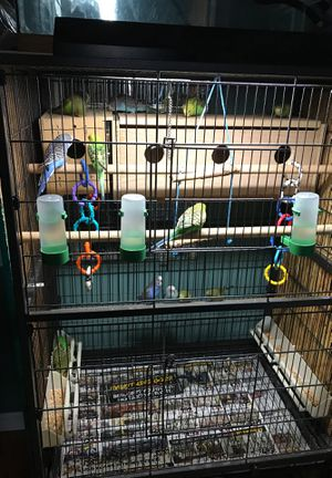 Bird cage all accessories and everything for Sale in Warren, MI