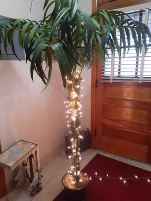 Fake Palm with lights/Across frm Pepsi Plant exit off bridge for Sale in McKees Rocks, PA