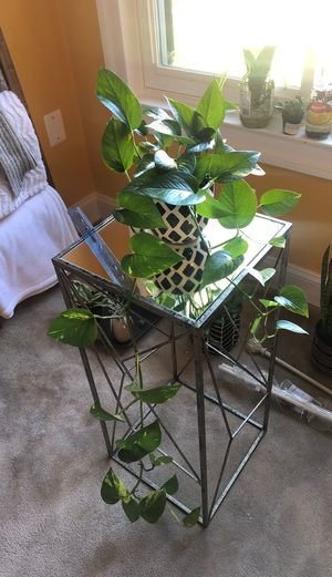 Long trailing pothos plant. Decorative pot included! for Sale in Greenbelt, MD
