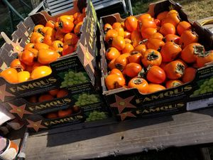 Persimmons fresh off the tree for Sale in Fresno, CA