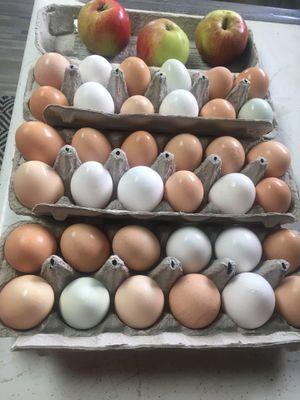 Fresh Eggs - Free Range for Sale in Aberdeen, WA