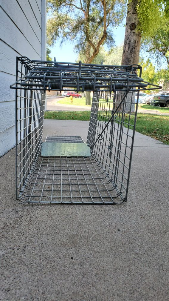 Large live animal trap