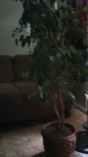 Fake plant for Sale in Moreno Valley, CA