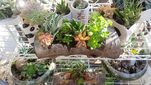 Handcrafted cherrywood flower pot with 6 succulents for Sale in Lodi, CA